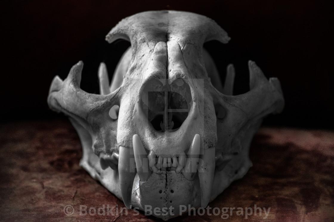 """""""Predator Skull"""" stock image"""