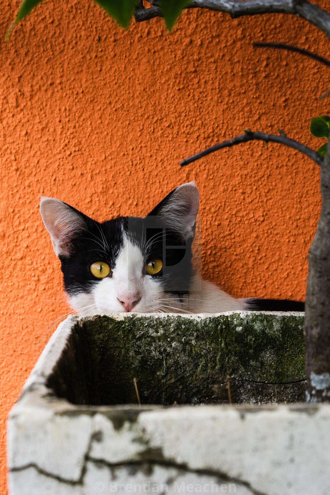 """""""Peek a boo cat"""" stock image"""