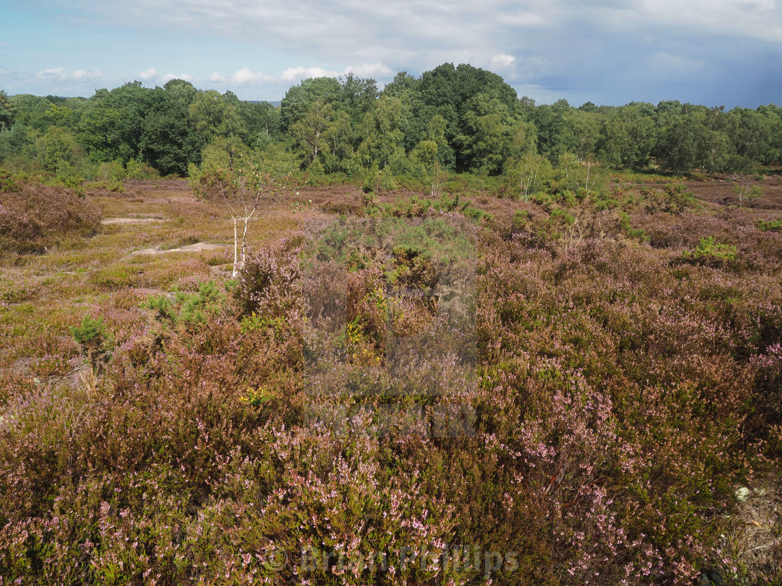 """Thursley National Nature Reserve"" stock image"