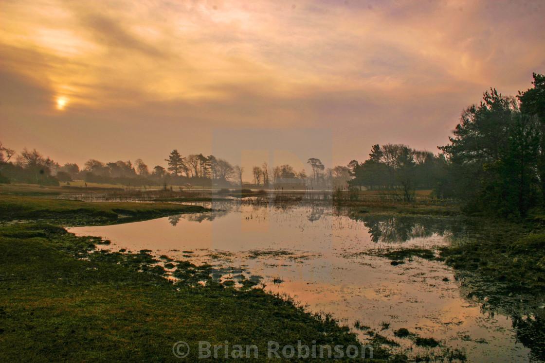 """""""New Forest Sunrise"""" stock image"""