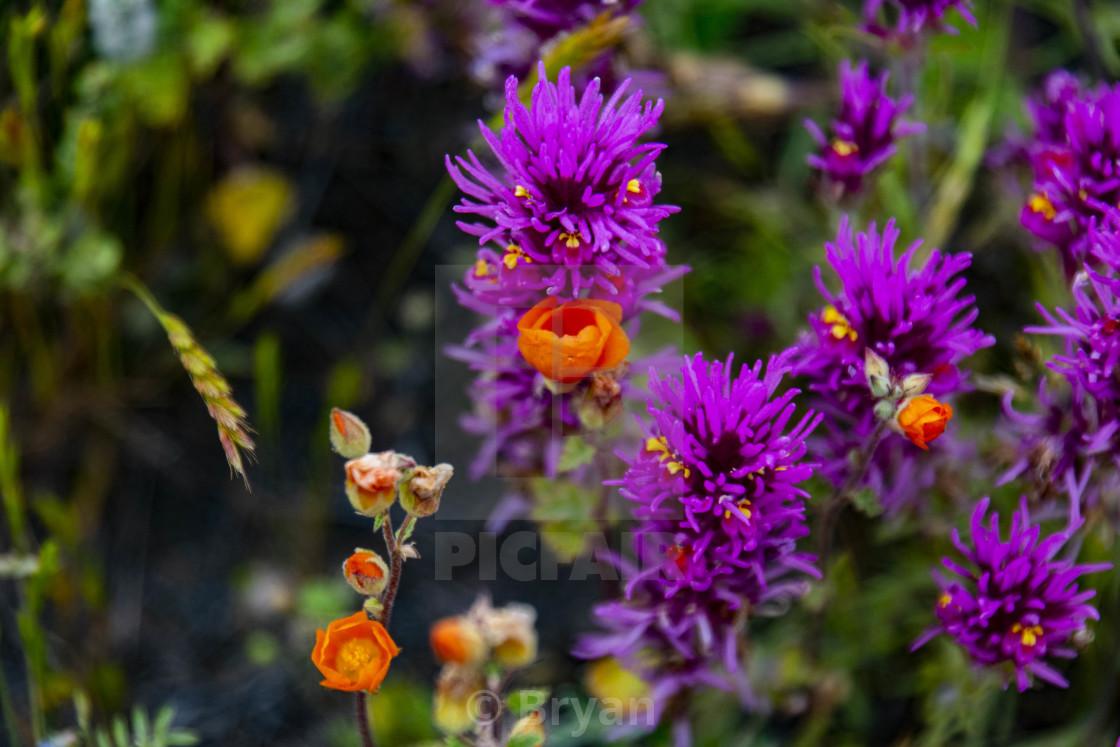 """""""Purple paintbrushes"""" stock image"""