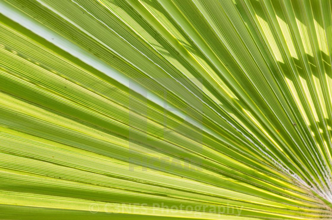 """Green palm leaf"" stock image"