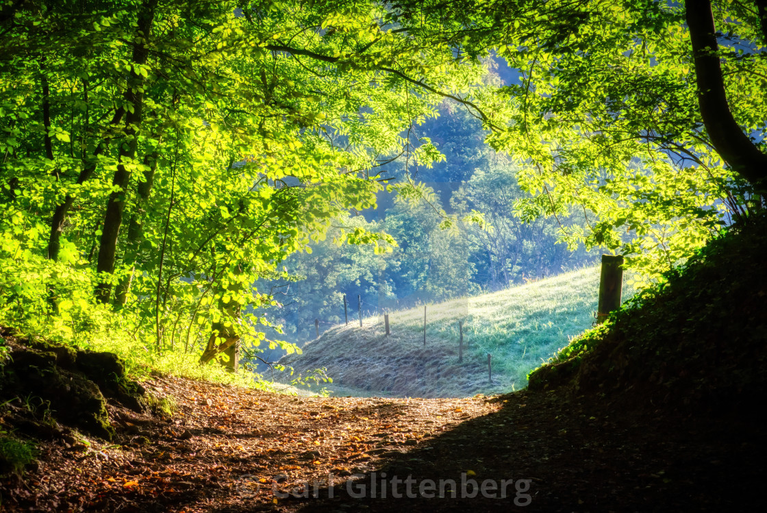 """A path in the woods in the early morning"" stock image"