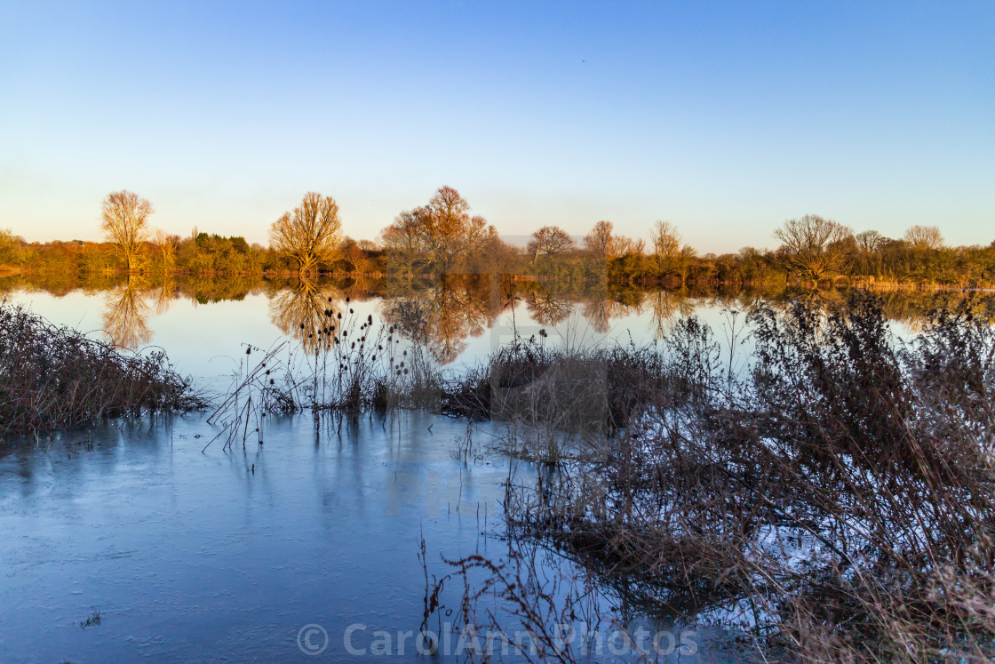 """""""Flooded winter fenland"""" stock image"""