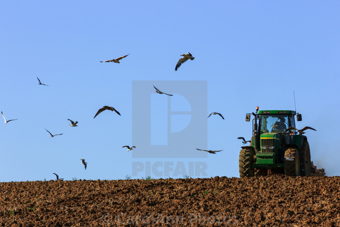 """""""After the harvest"""" stock image"""