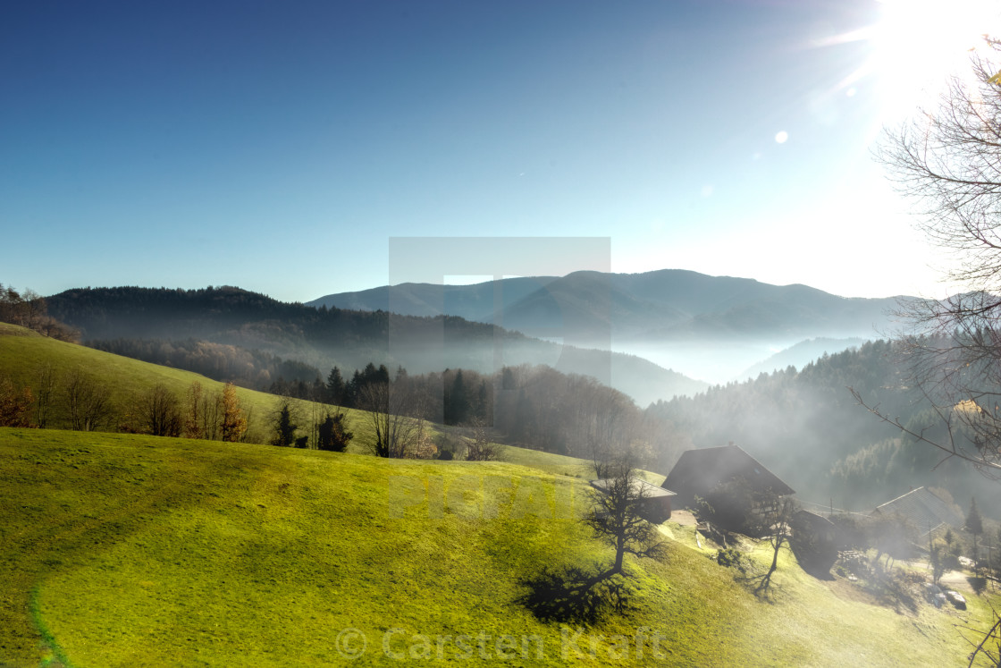 """Black Forest foggy scenery"" stock image"