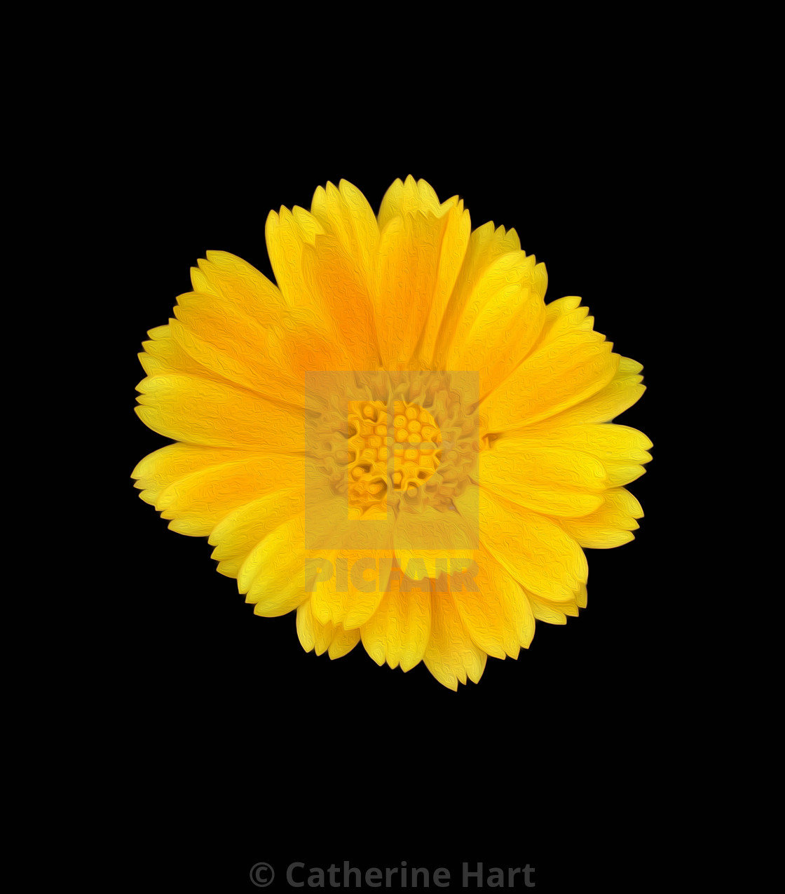 """Yellow flower of Sitges"" stock image"
