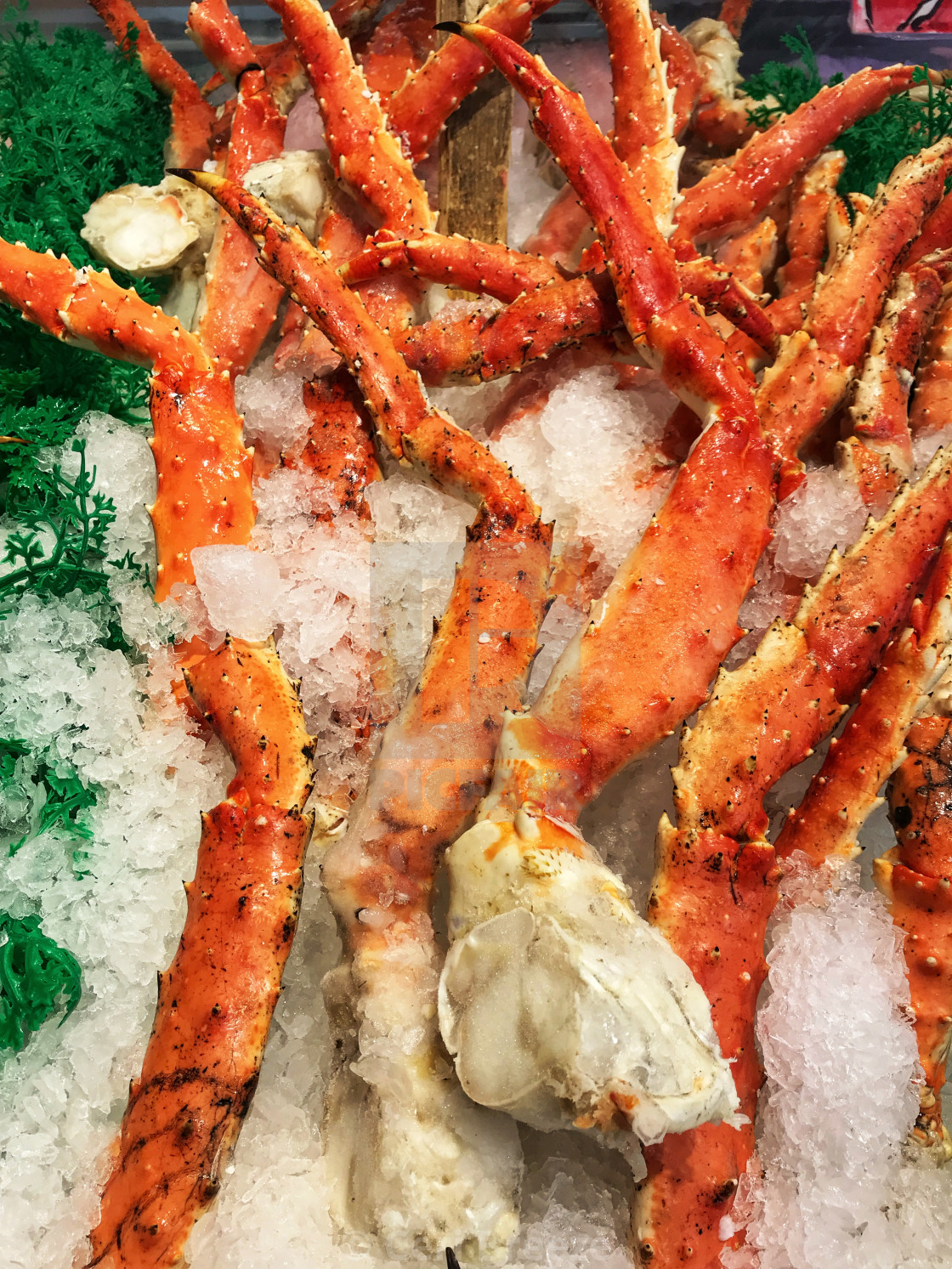 Close up of king crab legs on ice