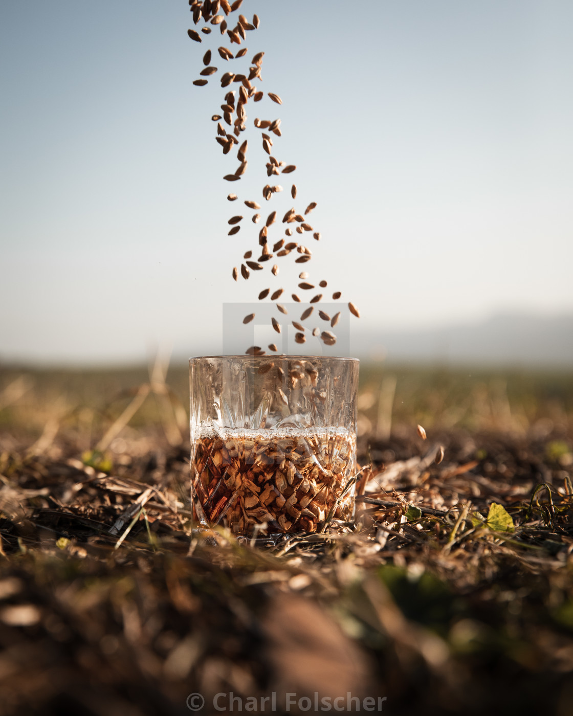 """Barley to whiskey"" stock image"