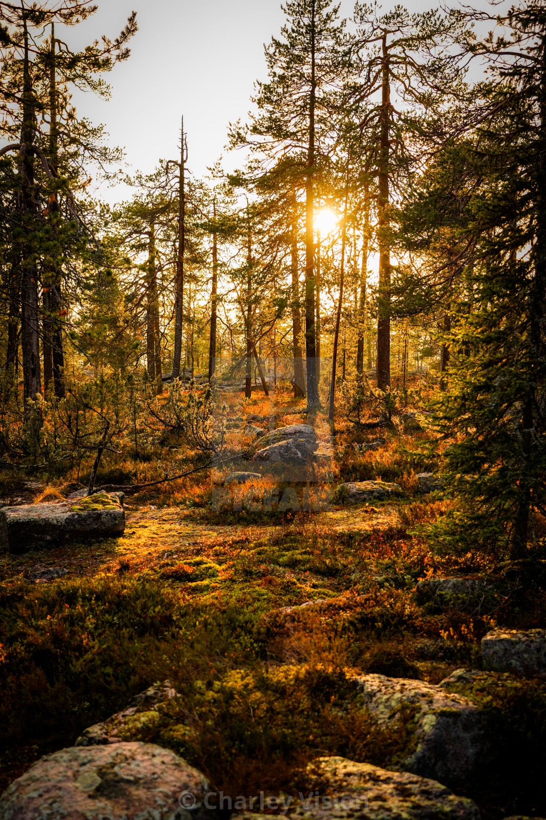 """A Scandinavian sunset"" stock image"