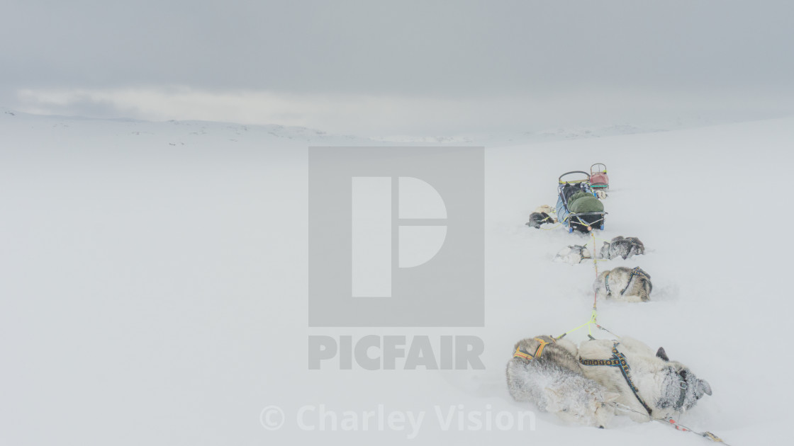 """Let it snow - Arctic Expedition"" stock image"