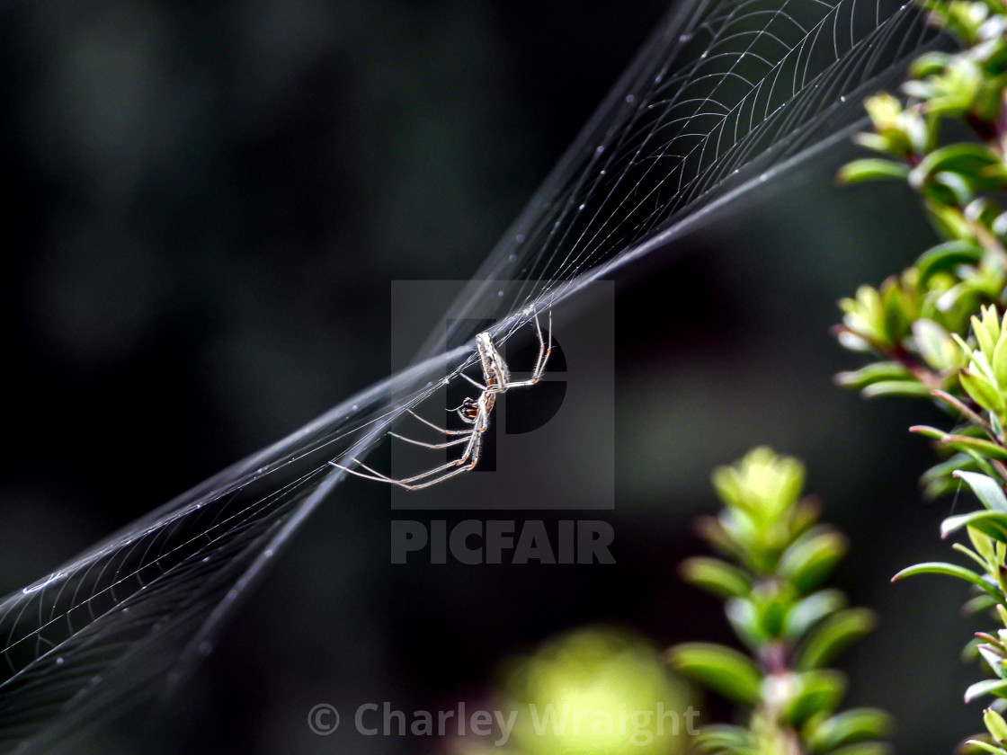 """A spider on a web."" stock image"