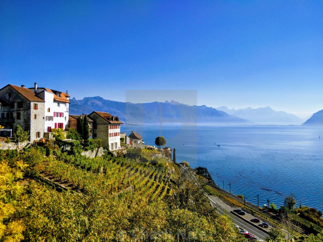"""Lavaux vineyards"" stock image"