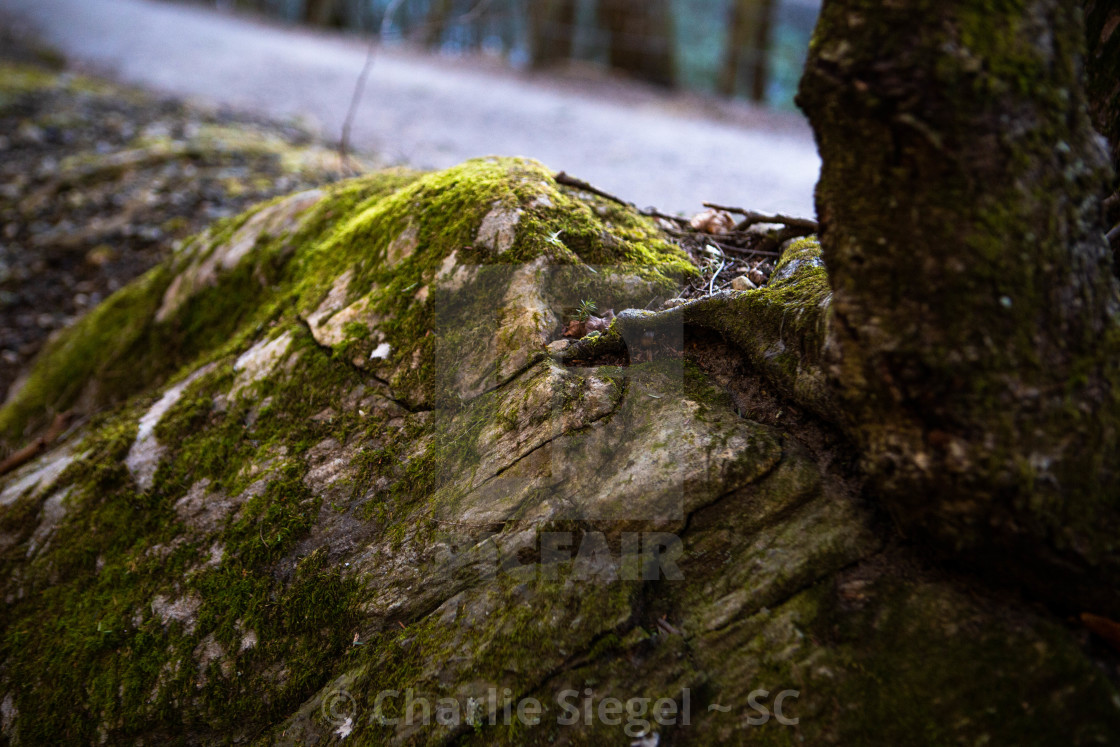 """Tree Beats Rock"" stock image"