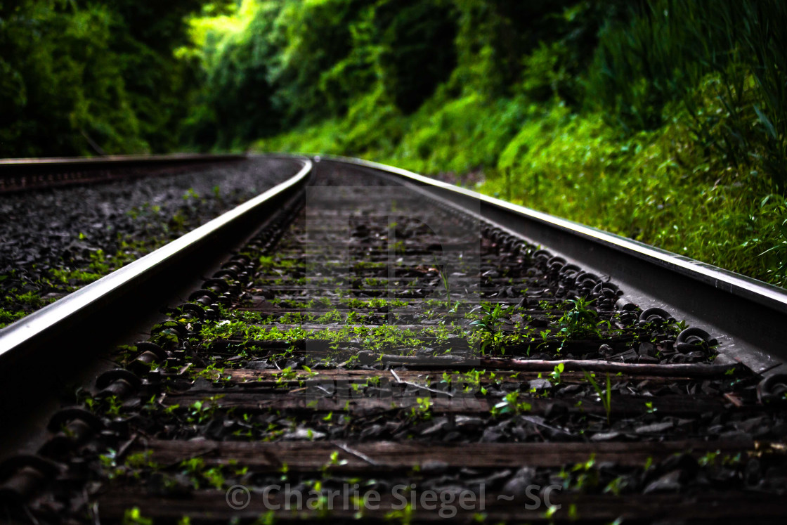 """Greenery on the Railroad"" stock image"