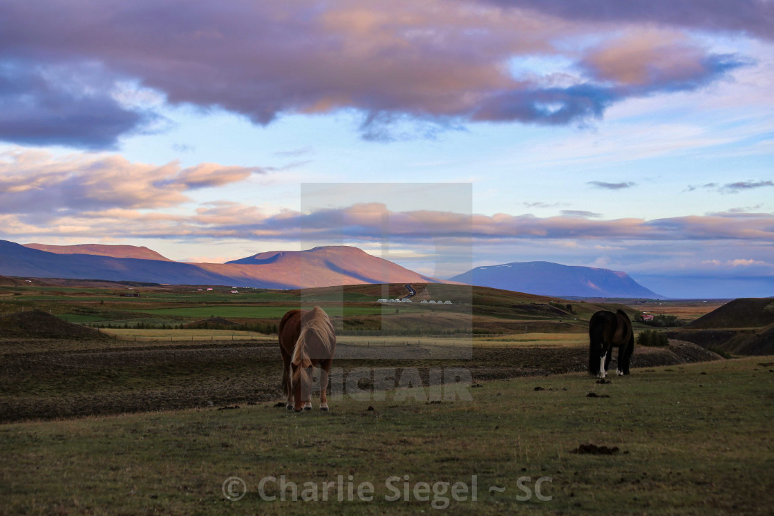 """Icelandic Horses at Sunrise"" stock image"