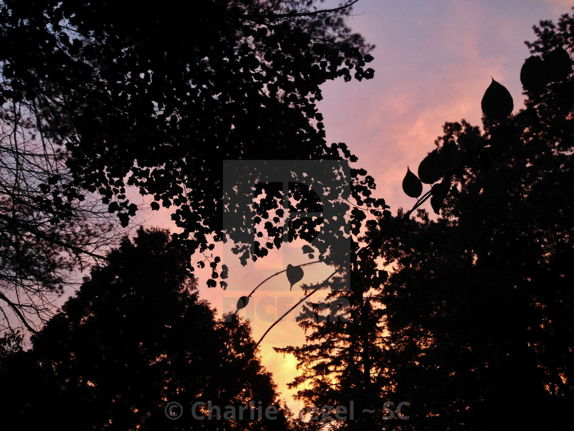 """Sunset in the Forest"" stock image"