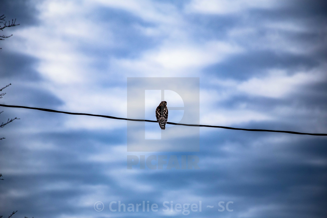"""Red-Shouldered Hawk perched before a beautiful sky"" stock image"