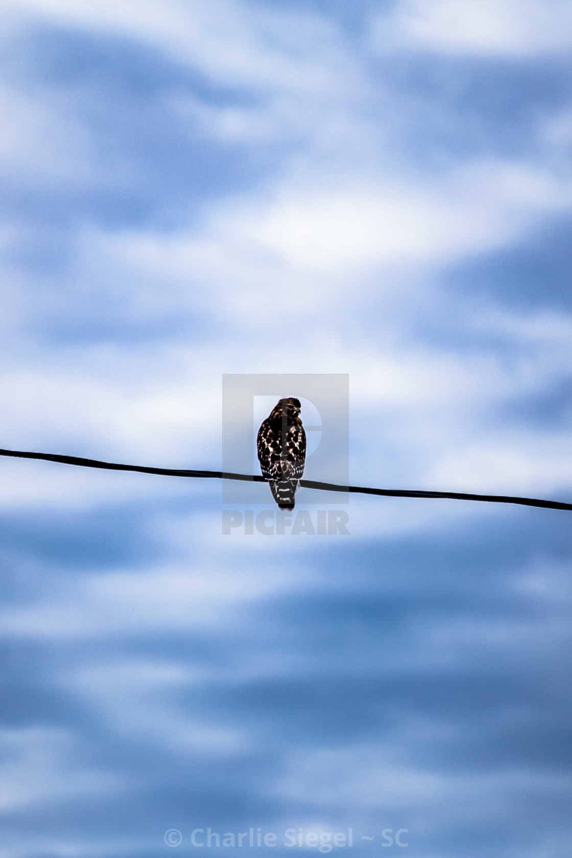 """Red shouldered hawk perched before a powerful sky"" stock image"