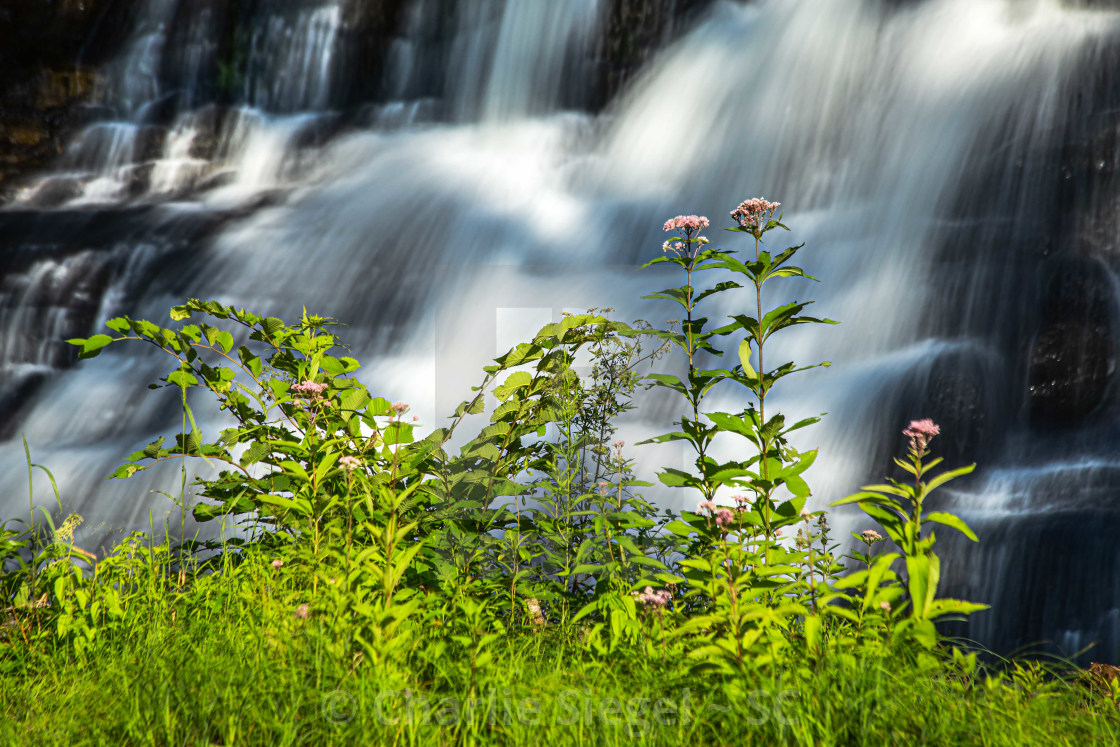 """""""Pink Wildflowers in front of the Waterfall"""" stock image"""