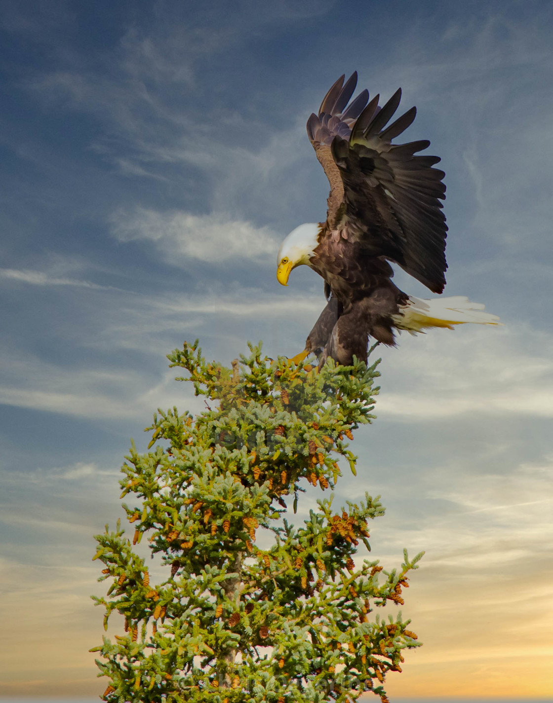 """""""The Eagle is Landing"""" stock image"""