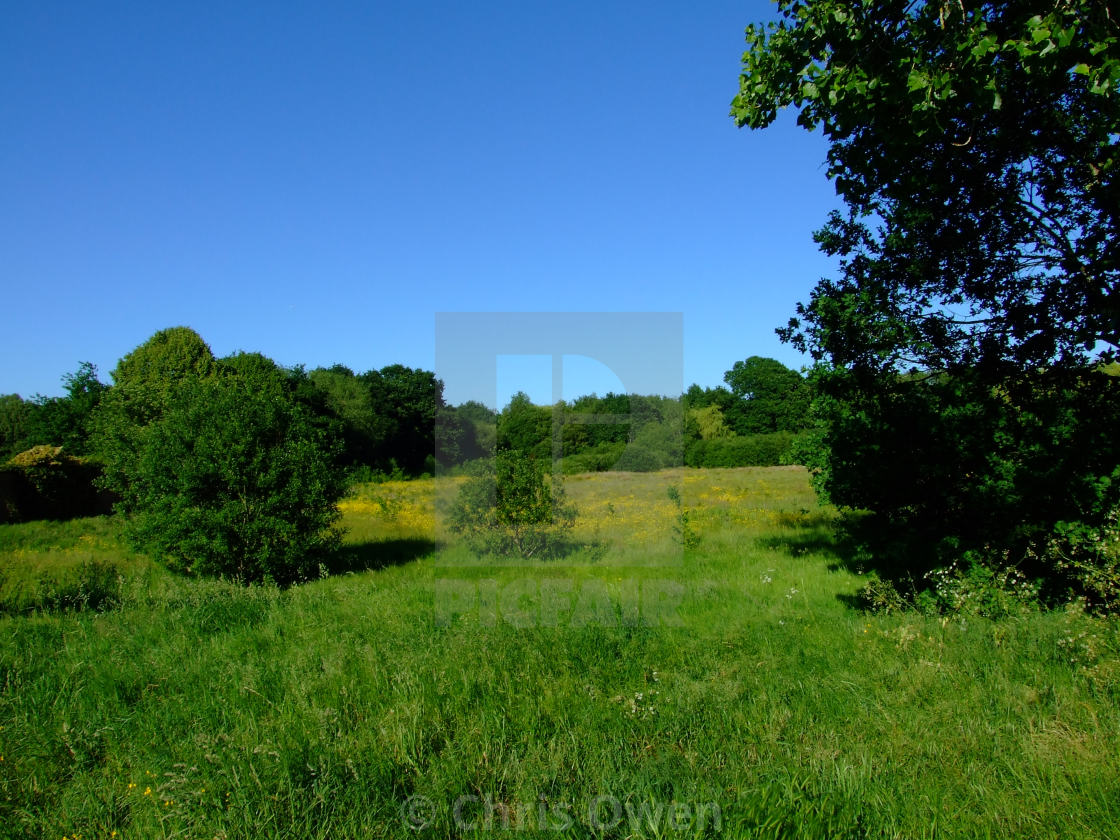 """""""Country park on an early summer day"""" stock image"""