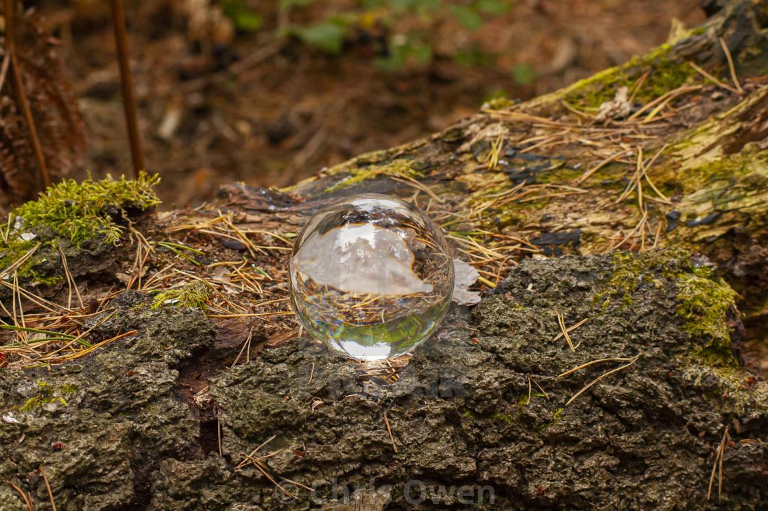 """""""Crystal Ball on a log"""" stock image"""