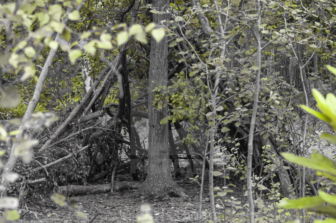 """""""Woodland Den 1"""" stock image"""