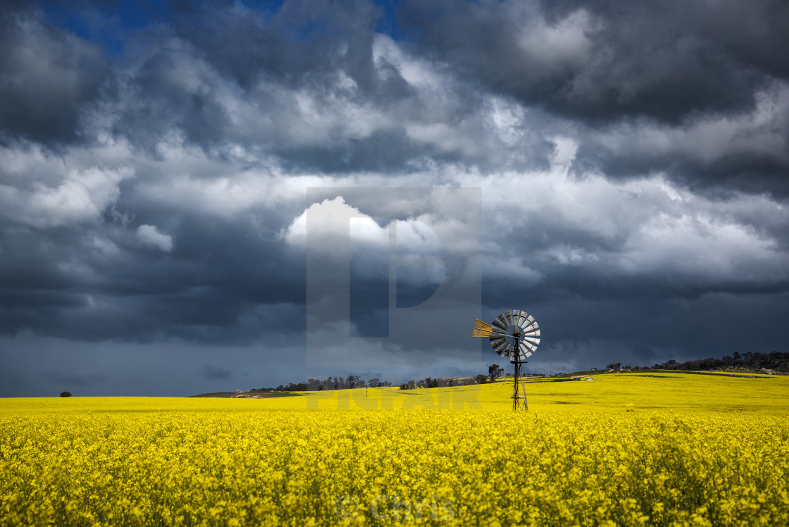 """Windmill canola field Perth"" stock image"