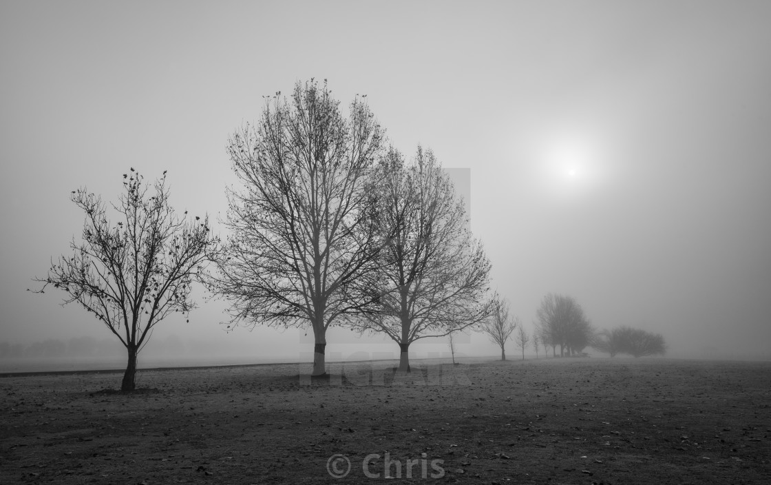 """""""Trees in foggy morning"""" stock image"""