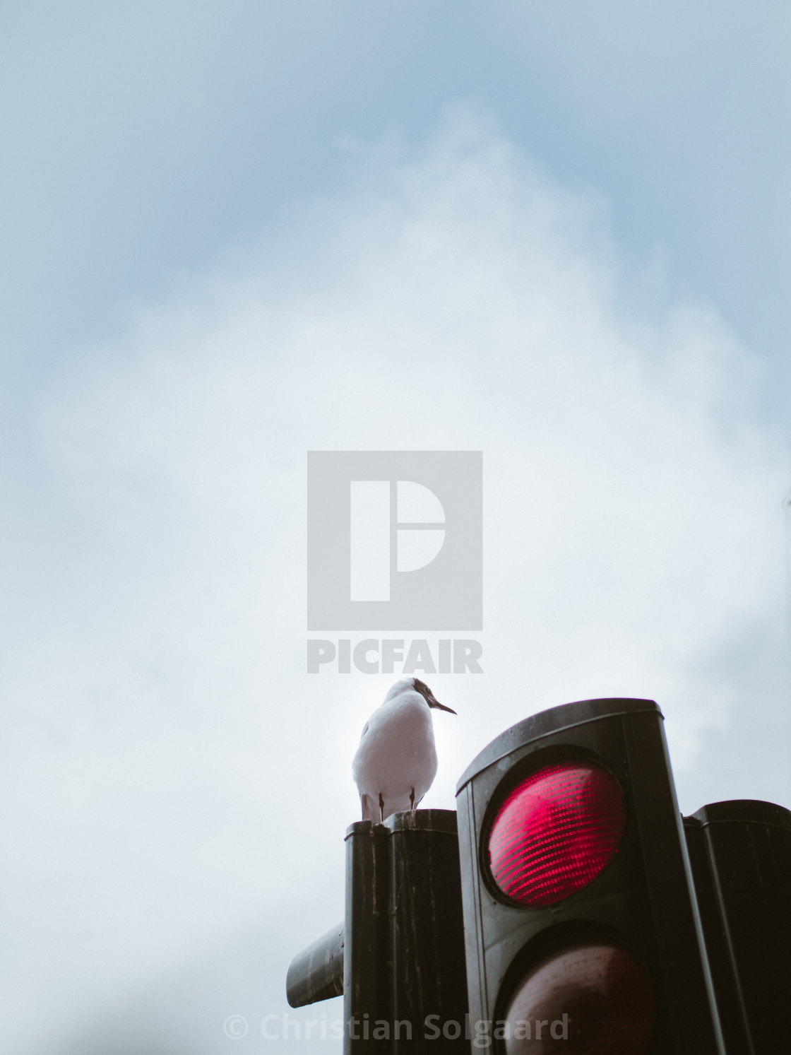 """Seagull on traffic light"" stock image"