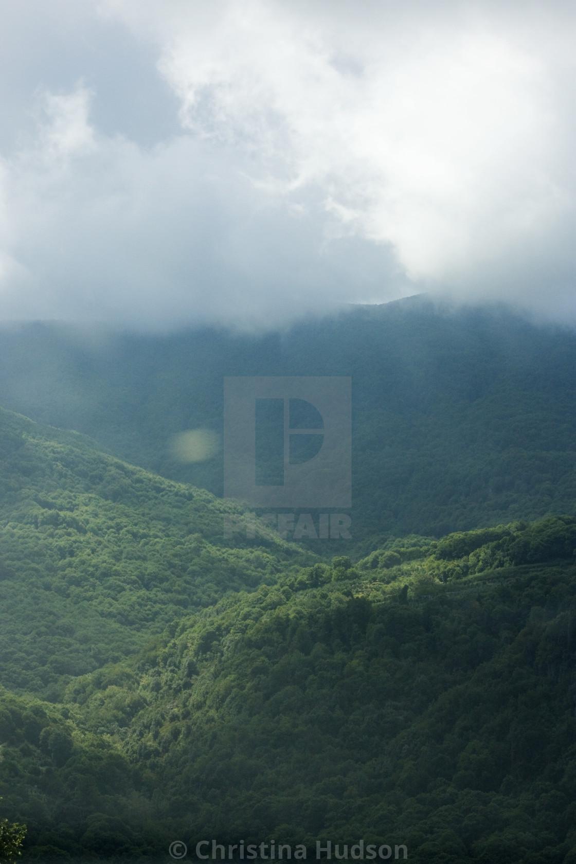 """""""Pelion Mountain Trees"""" stock image"""
