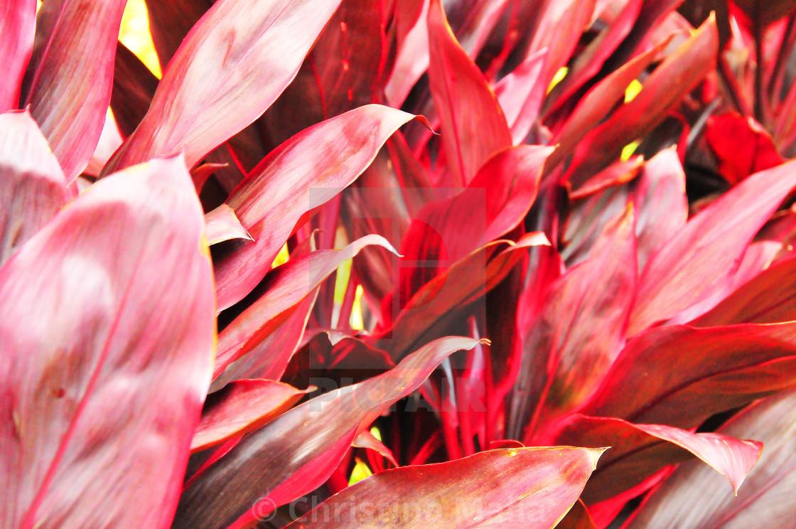 """Medellin flowers"" stock image"