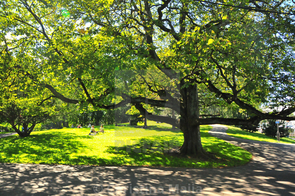 """""""A giant tree giving shade in a sunny summer afternoon"""" stock image"""