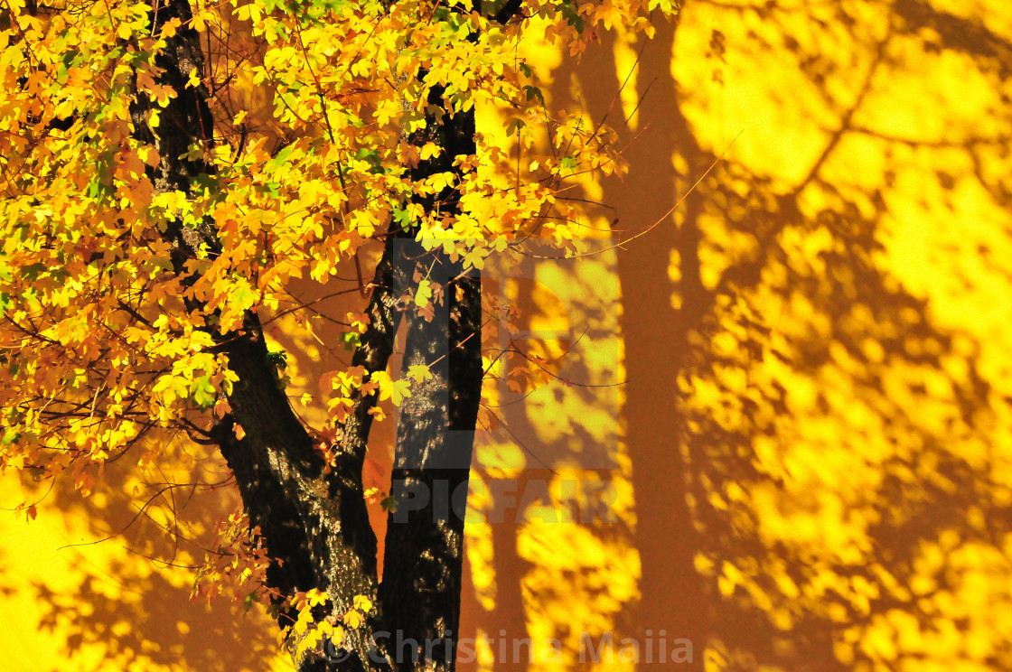 """""""Golden leaves against a golden wall"""" stock image"""