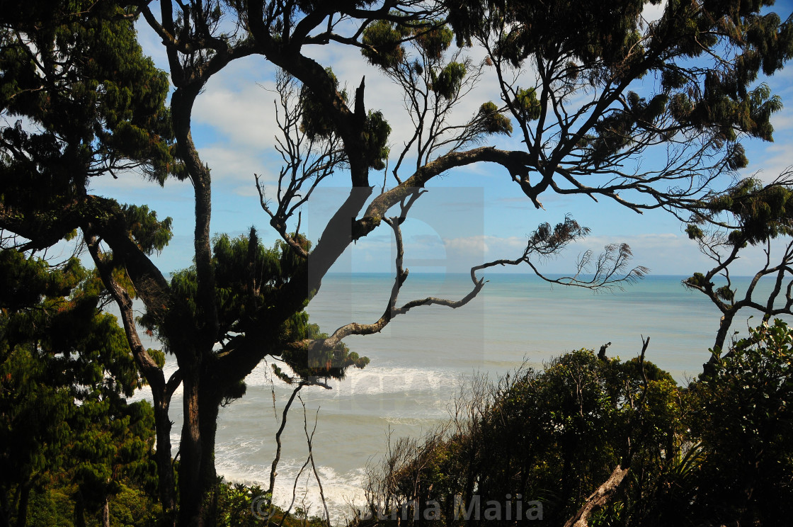 """""""Graceful trees embrace the sea in New Zealand"""" stock image"""