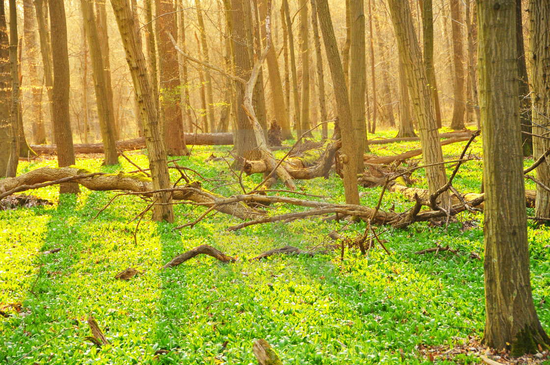 """""""Magic forest scenery in Black Forest, Germany"""" stock image"""