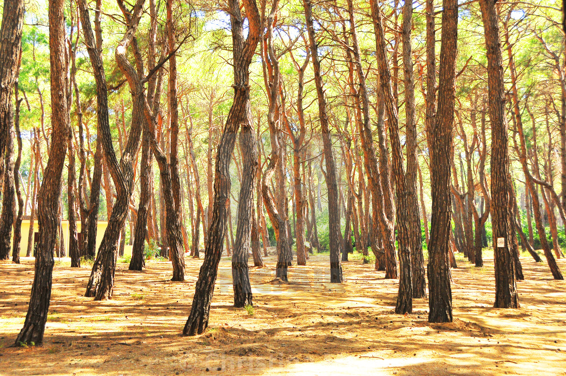 """""""Summer forest in Side, Turkey"""" stock image"""
