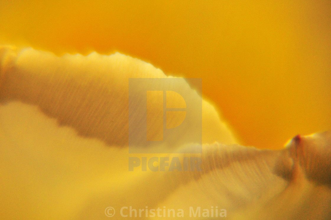"""""""Sensual Touch - Abstracts"""" stock image"""