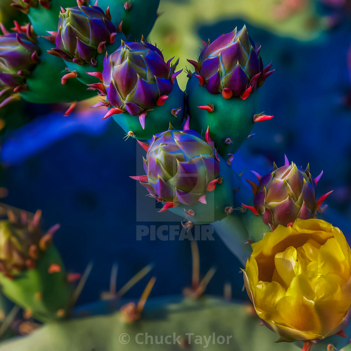 """plant-cactus-bloom-desert-spring"" stock image"