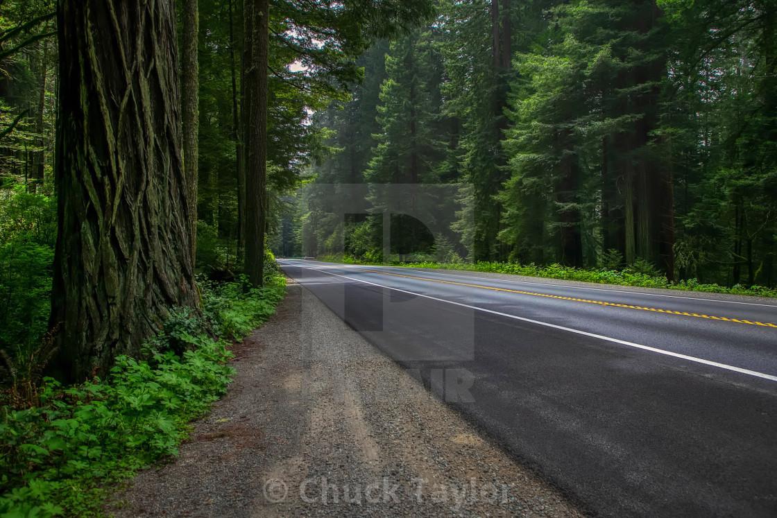 """vacation-travel-landscape-california-redwoods-trees"" stock image"