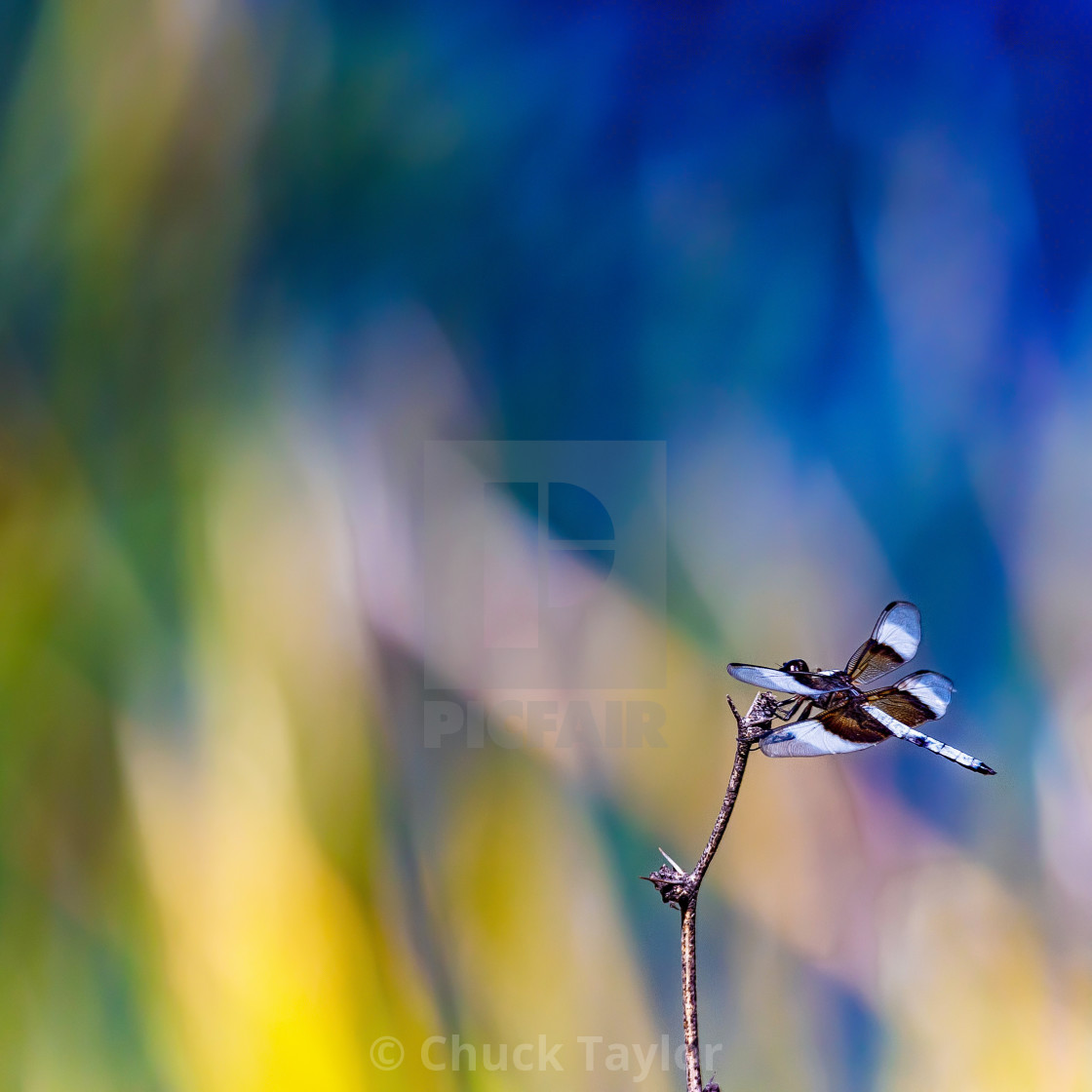 """""""dragonfly-animal-fine art-colorful"""" stock image"""
