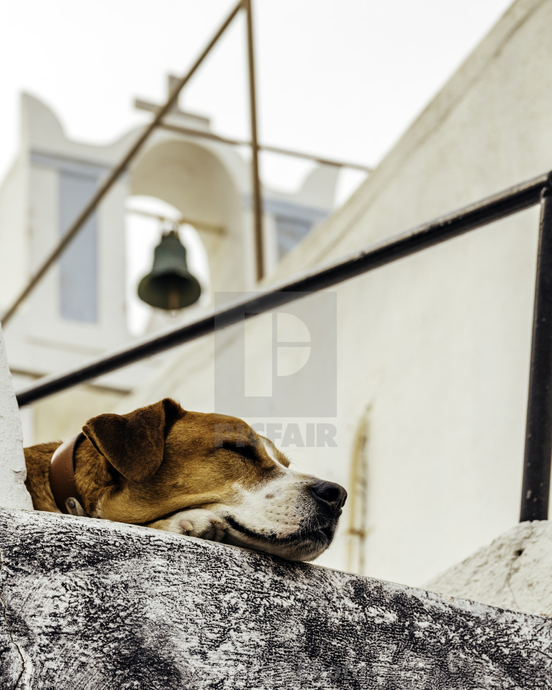 """""""Dog sleeping on the rooftop of traditional old town house"""" stock image"""