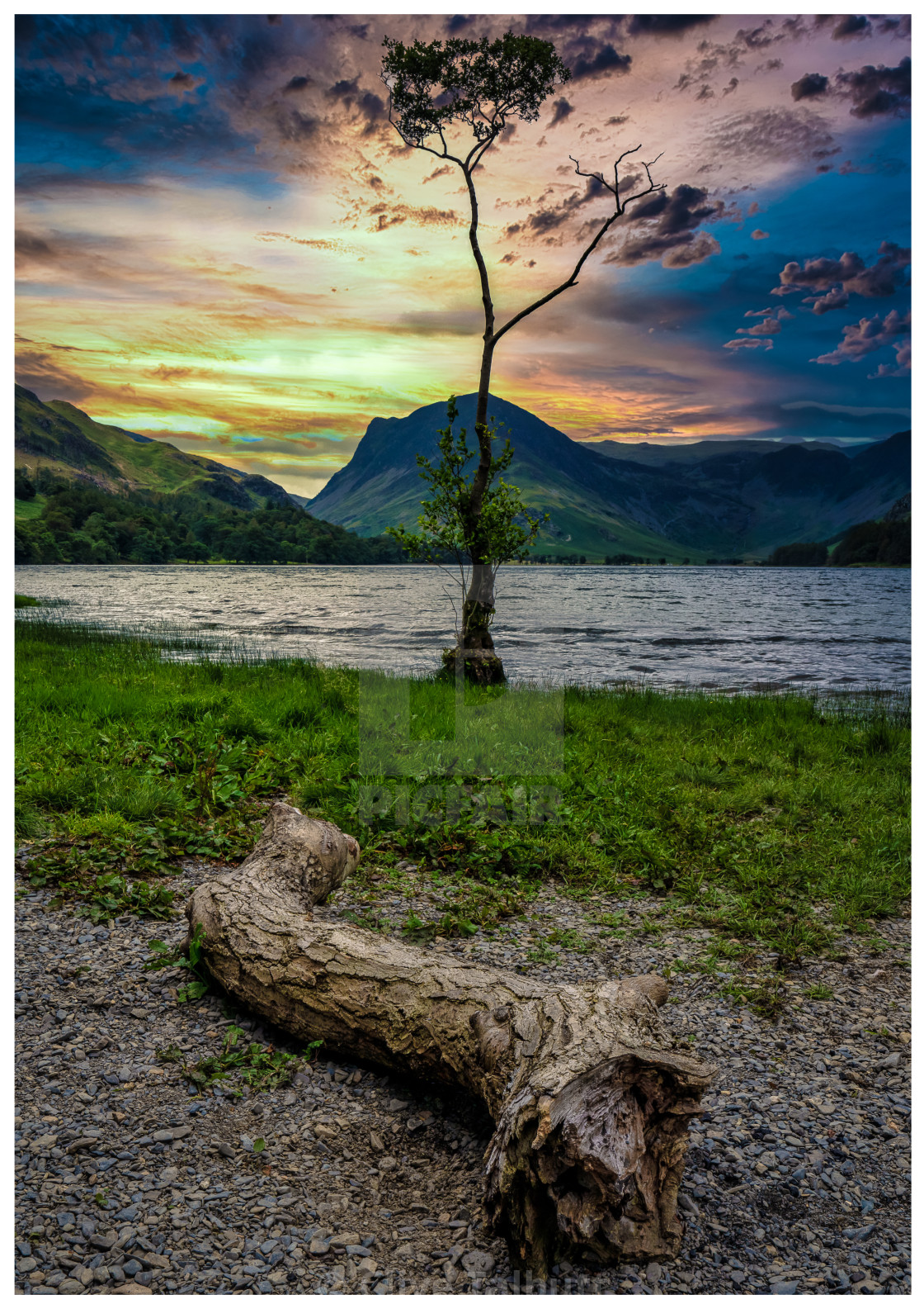 """""""Lone Tree Buttermere"""" stock image"""