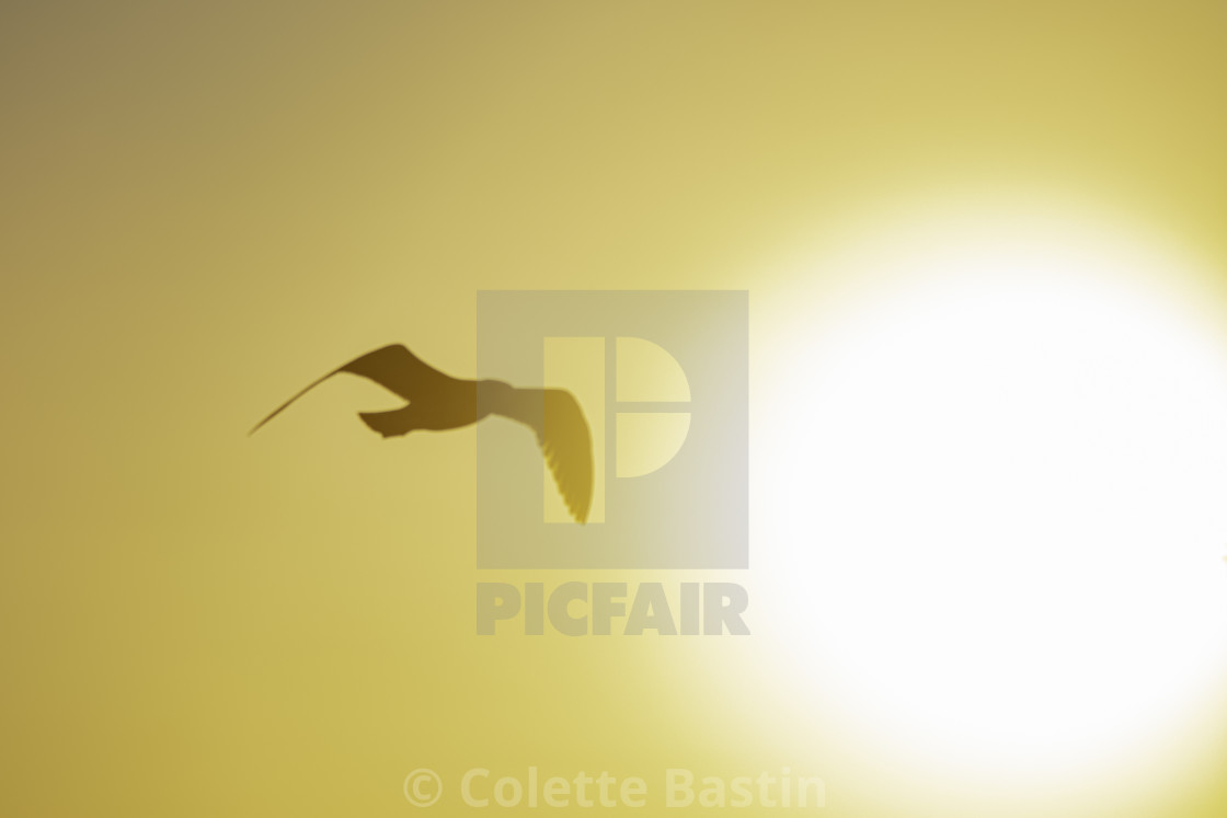 """In flight"" stock image"