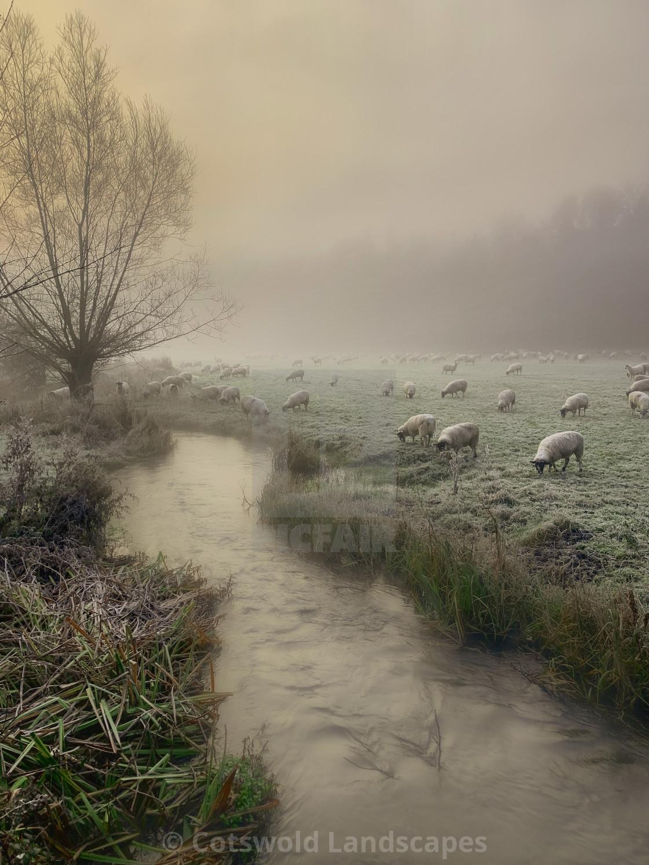 """River Sheep"" stock image"