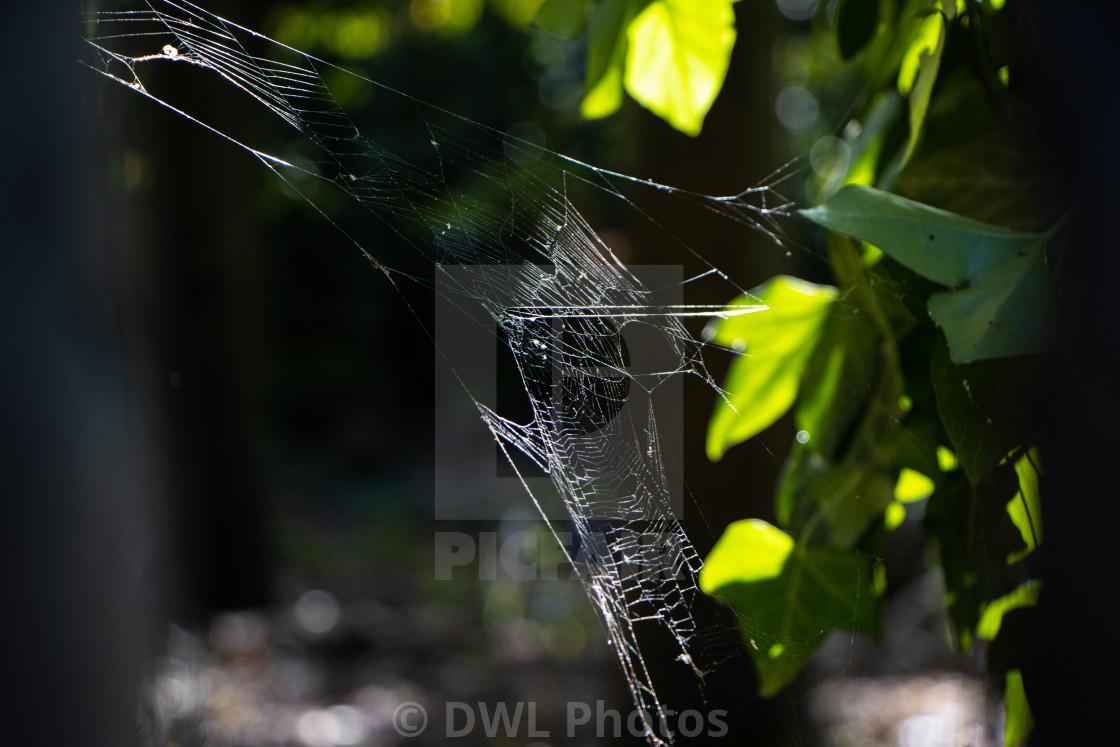 """Nature's geometry"" stock image"