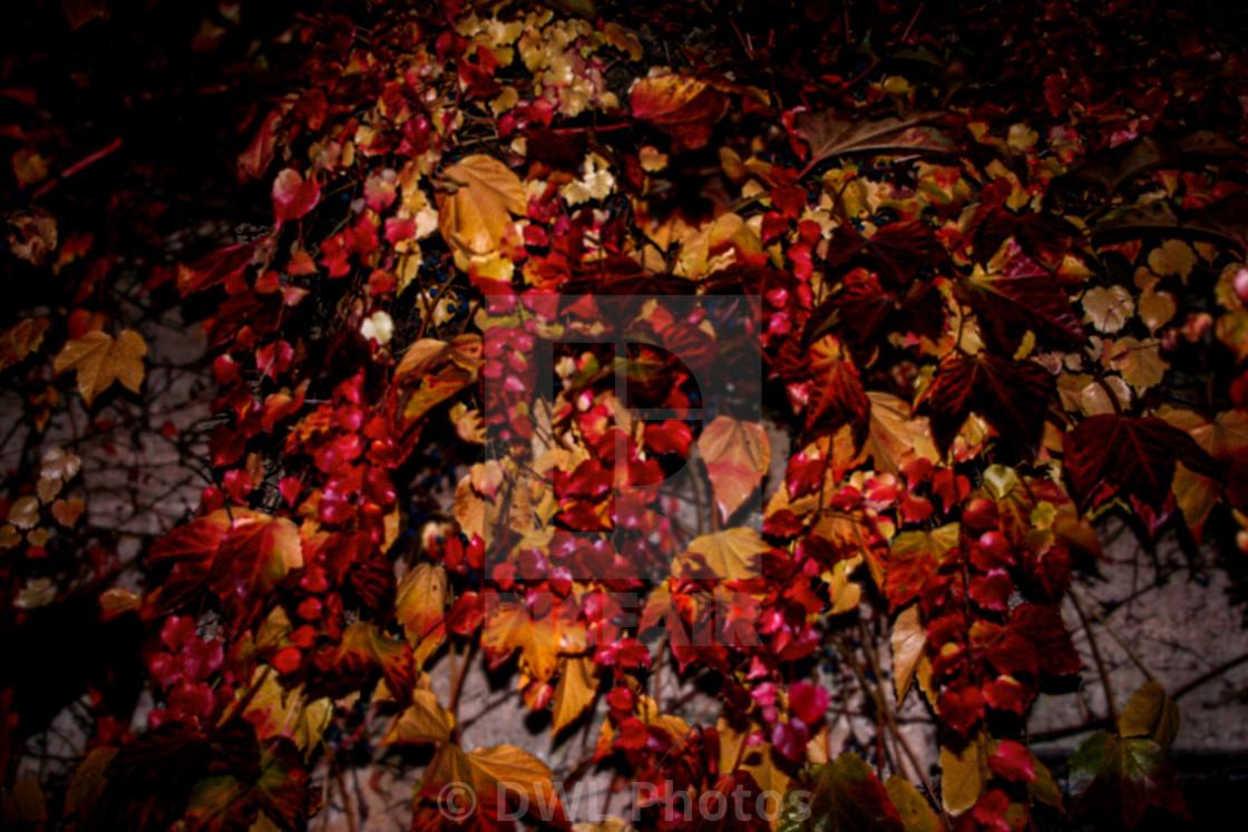 """Blurred Autumn"" stock image"