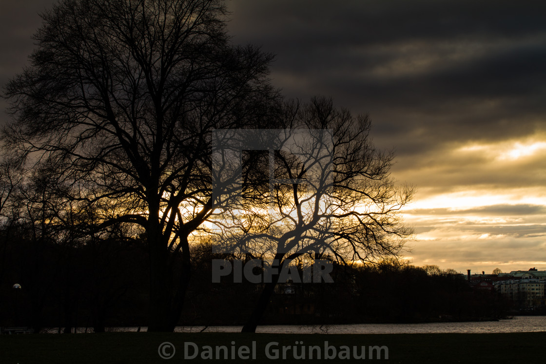 """""""Trees in backlight"""" stock image"""