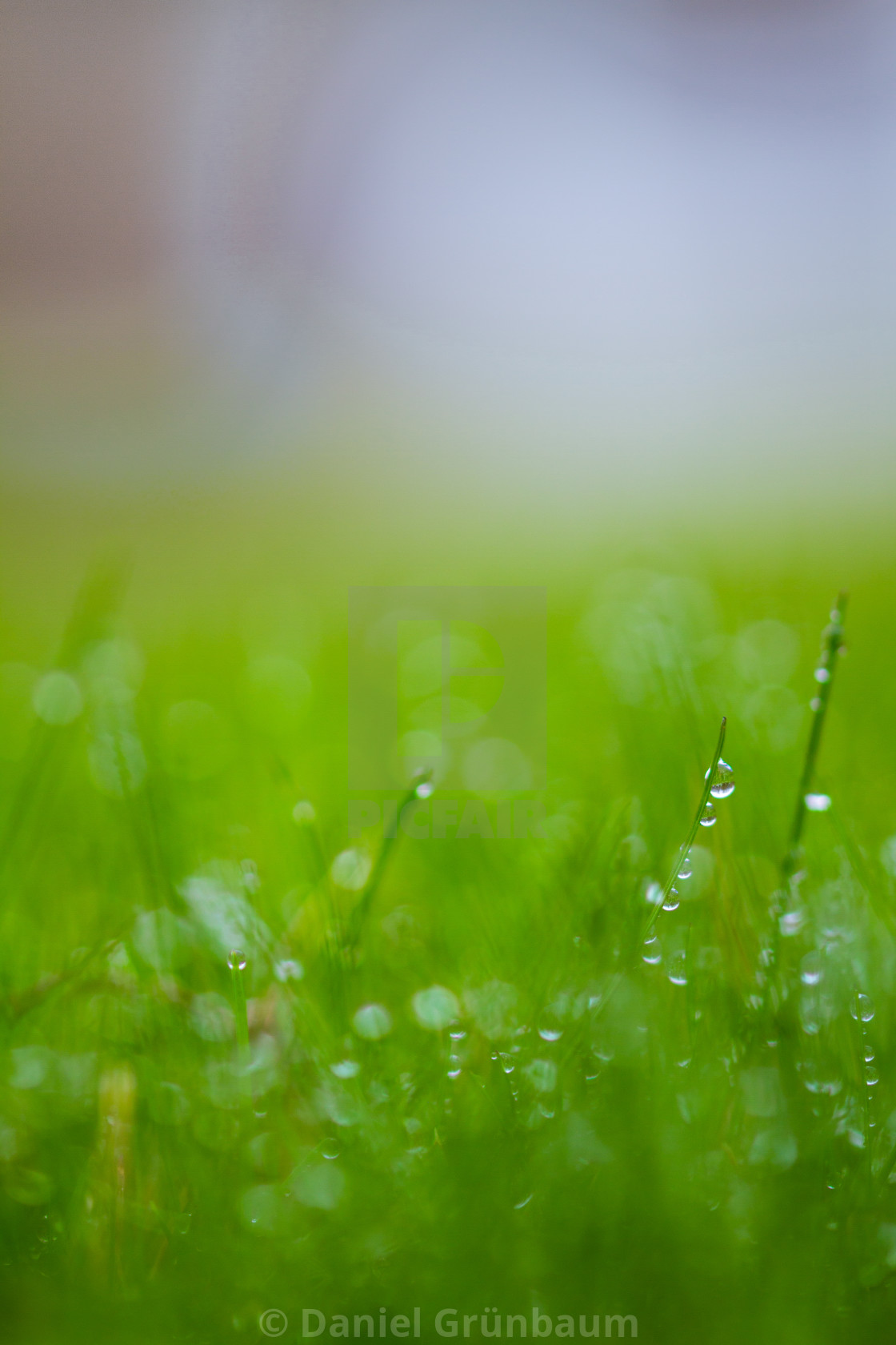 """""""Drops on grass"""" stock image"""